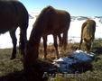 Продам лошадей разного возраста