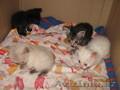 милые,  игривые котят ищут новый дом для себя